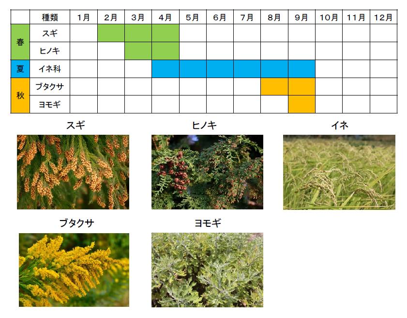 アレルギー性鼻炎・花粉症の治療 | 上野医院